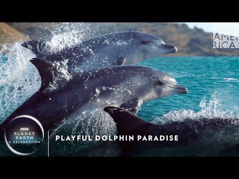 Playful Dolphin Paradise 🐬 Planet Earth: A Celebration | BBC America