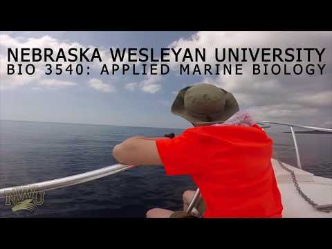 NWU Honduras | BIO 3540 Applied Marine Biology