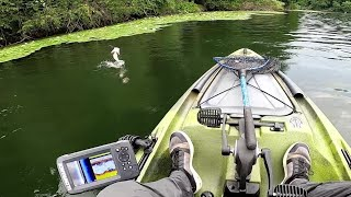 Early Summer Bass Fishing Where Do The Bass Go After The Spawn