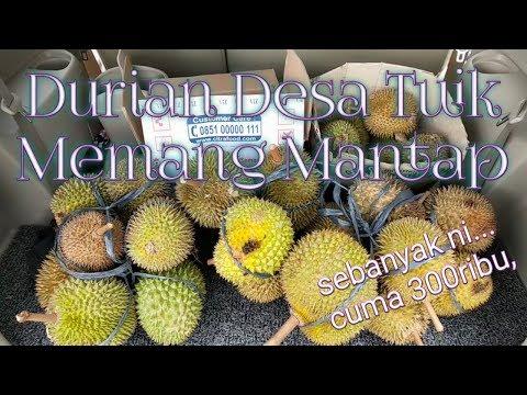 durian Desa Tuik || rasanya memang kantaaaab nian