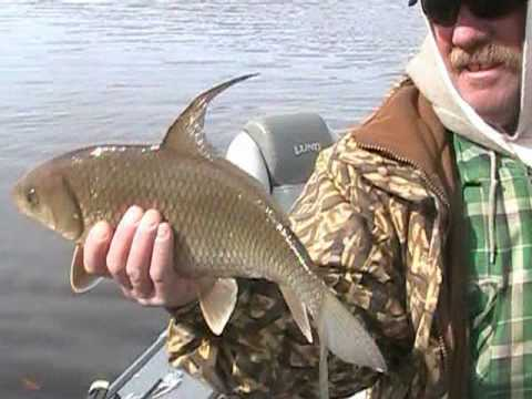 Fishing the wisconsin river youtube for Fishing in wisconsin