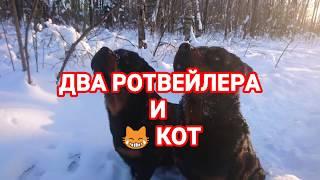 ДВА РОТВЕЙЛЕРА И КОТ В ЗИМНИХ УСЛОВИЯХ🔆.воспитание и дрессировка собак