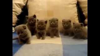 Любимые котята...