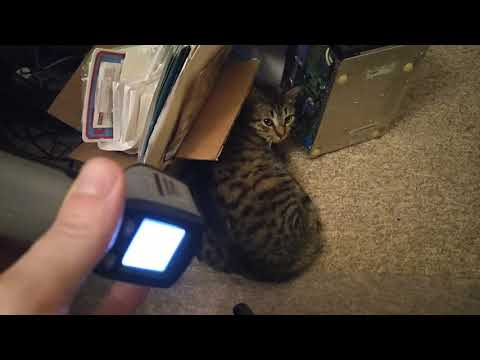 Incoming Digsby laser! Now with more cat!