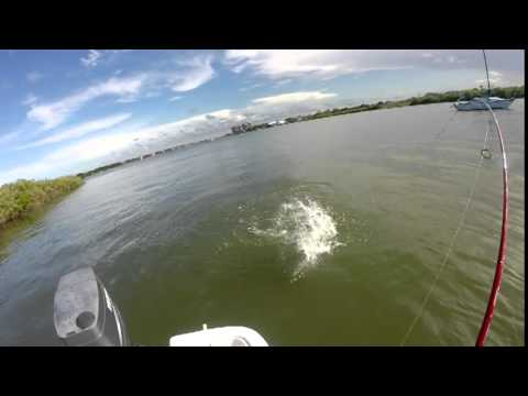 Redfish Central Florida New Smyrna Beach Ponce Inlet Area (ReDo) May 31, 2015