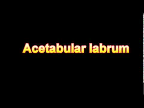 what is the definition of Acetabular labrum (Medical Dictionary Online)