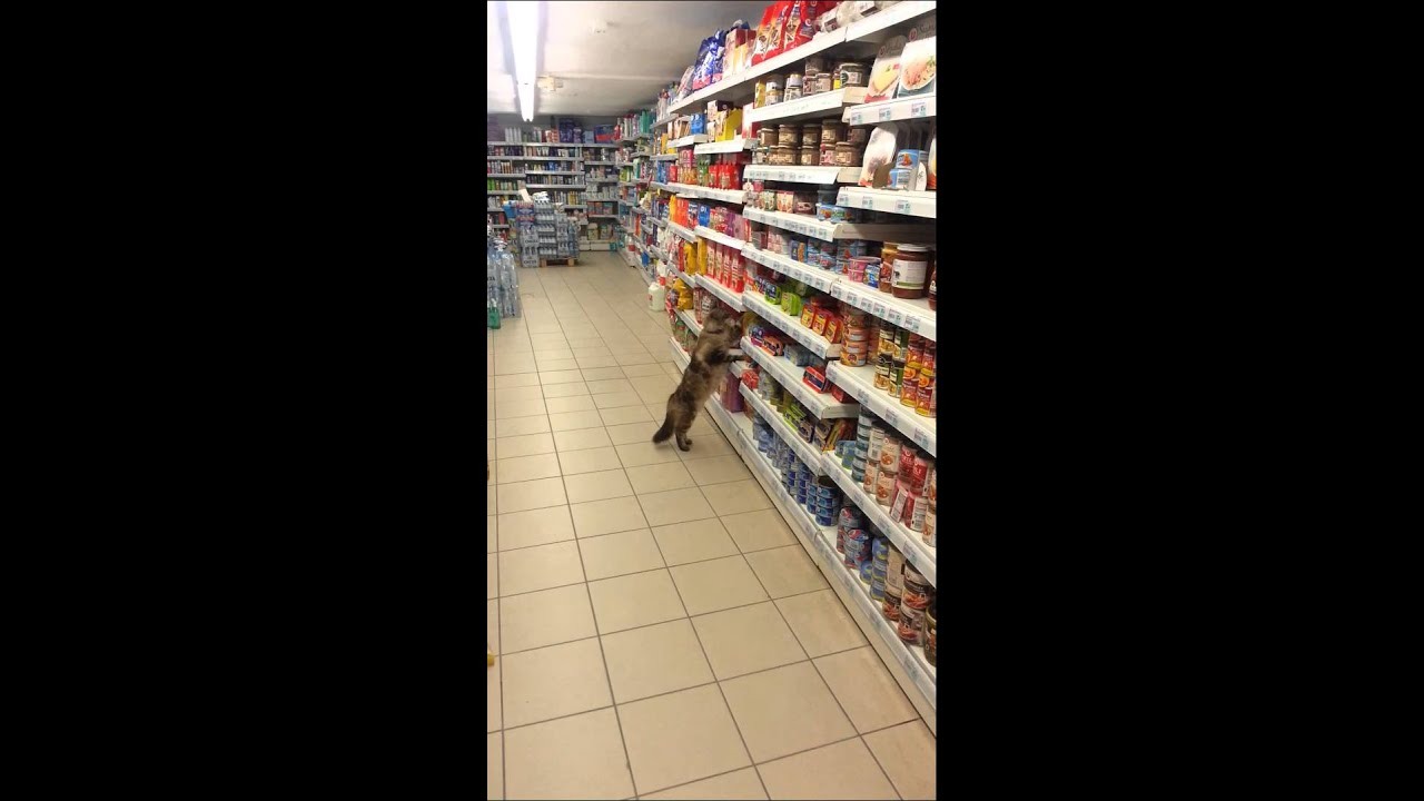 Funny Cat In Supermarket YouTube