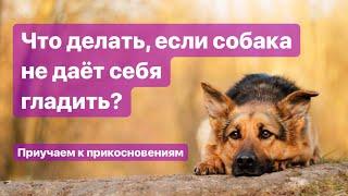 Что делать, если собака не дает себя гладить? Приучаем к прикосновениям хозяина