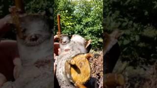 видео Навіщо потрібні горіхи
