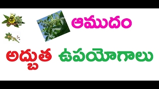Amazing benefits of Castor oil  for hair growth / amudam / Health and Beauty / Ttube Telugu