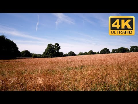 Relaxation  : 4K relaxation  meadow with nature sounds