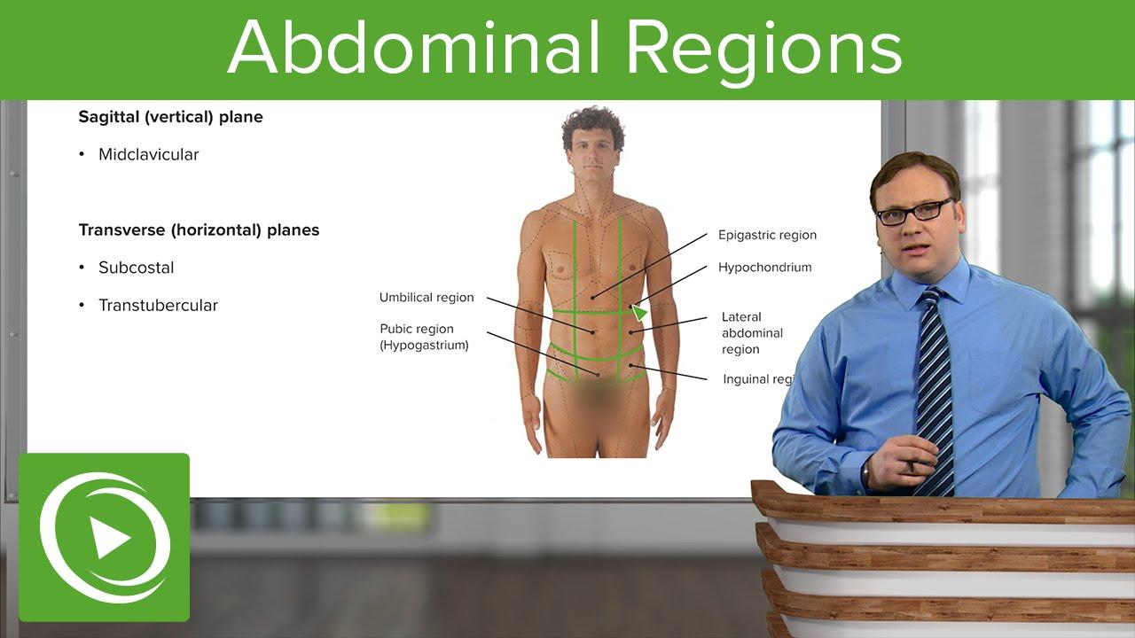 Abdominal Regions – Anatomy | Lecturio
