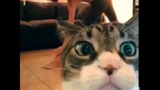 кот и йога