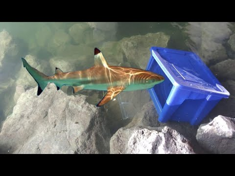 PLASTIC BIN FISH TRAP Catches BIG FISH! DIY Fishing