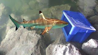 plastic-bin-fish-trap-catches-big-fish-diy-fishing
