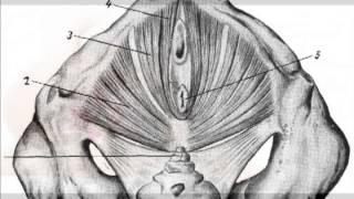 женское здоровье. тренировка интимных мышц для женского здоровья(Как предотвратить возрастные изменения, как укрепить женское здоровье на долгие годы? http://kursi.yanawings.ru/vagiton_pod..., 2013-05-07T16:48:10.000Z)