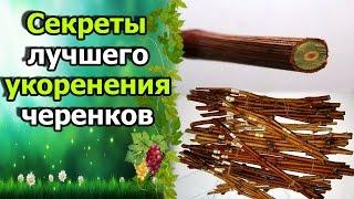 🍇Виды нижних срезов черенка винограда. Секреты укоренения.(, 2016-12-17T17:59:59.000Z)