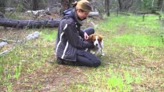 Amica At Sar Training