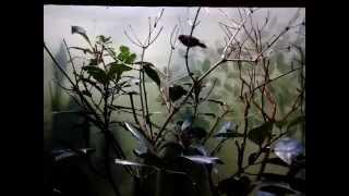Der Rotkopf-Papageiamadine begrüßt die neuen KOMET-Gäste!