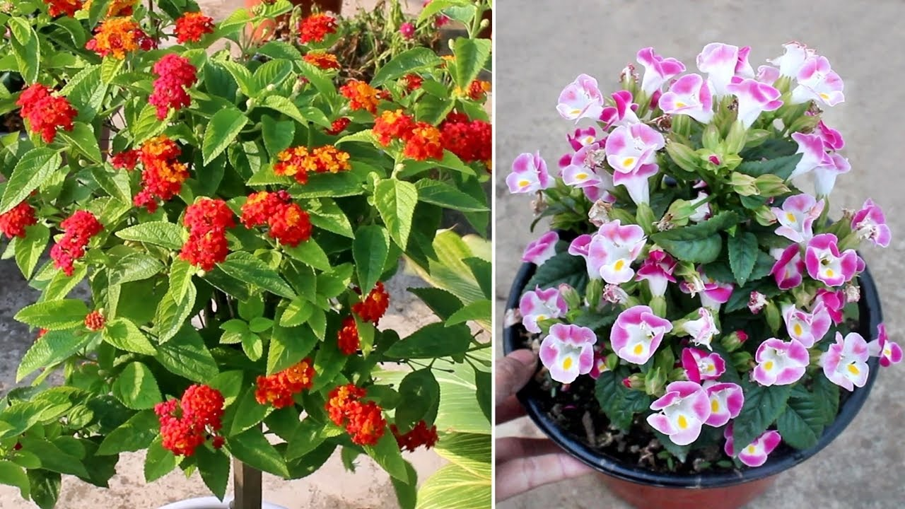 15 BLOCKBUSTER Plants that Bloom ALL Year Around