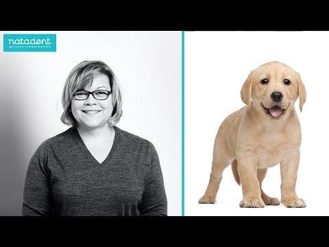 Если у собаки болят зубы