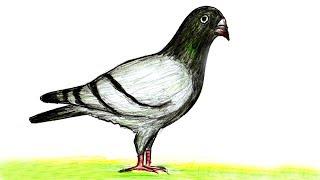 কবুতর আর্ট।দেখুন কি ভাবে খুব সহজে সুন্দর কবুতর আর্ট করা যায়।bird art by pencil
