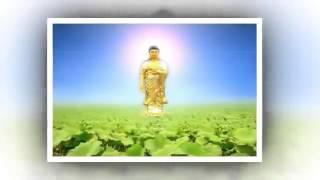 """Nhạc niệm Phật - Niệm Phật """"A di đà Phật"""" sự nhiệm mầu có thật!"""