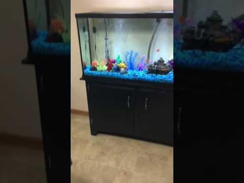 55 gallon fish tank stand petsmart