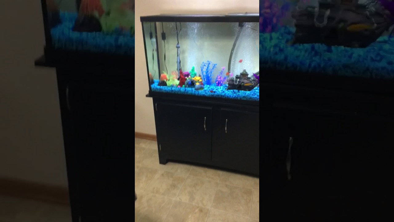 Petsmart marineland heartland 60gal aquarium and stand for Petsmart fish tank stand