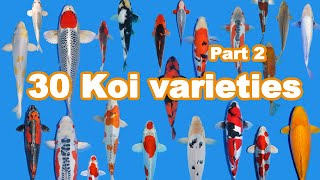 30 Koi Fish Varieties, Types And Characteristics (part 2)