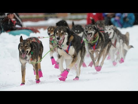 Iditarod 2018 begins with a celebration in Anchorage