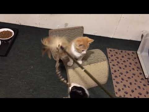 Cute kittens are back!