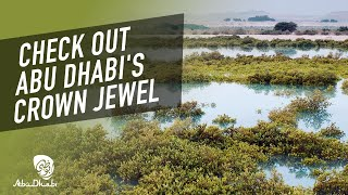 Explore the sprawling Mangrove National Park | Visit Abu Dhabi