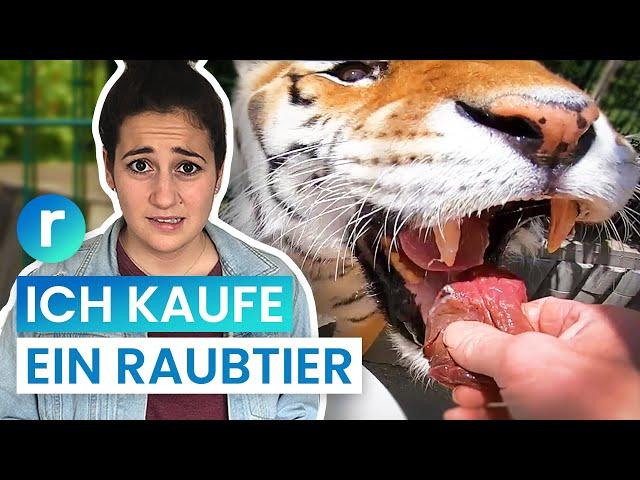 Tiger als Haustier: Geht das in Deutschland? | reporter