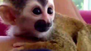 Маленькие забавные животные)