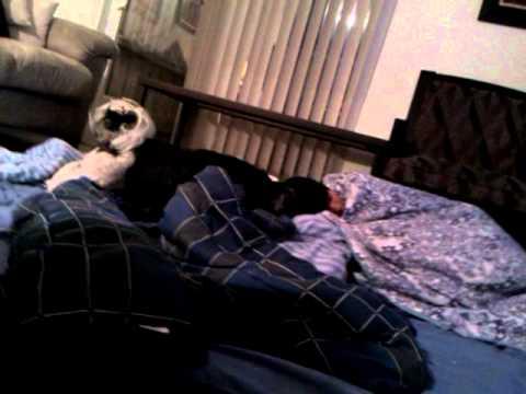 Dog sleep and woke up
