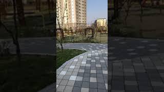 "Jalan"" musim semi korea"