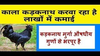 Kadaknath is nutritional breed   कड़कनाथ मुर्गा औषधीय गुणों से भरपूर है