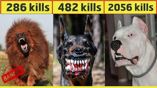 10 Most Dangerous Dog Breeds In The World In Urdu/Hindi   Largest Dog Breed   Pet dogs