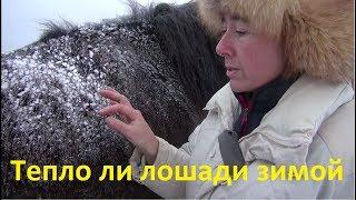 Тепло ли лошади в шерсти зимой?