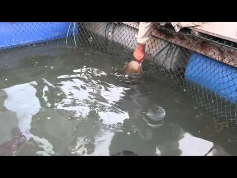 Fish Farm Langkawi Malaysia