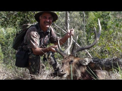 Hunting Rusa deer in New Caledonia part 46 (Hunting in the roar)