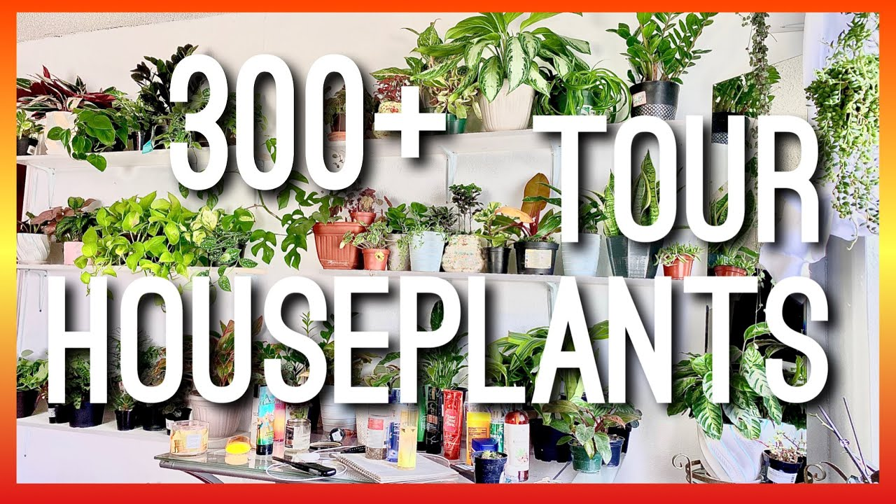 300+ 😱 HOUSEPLANT TOUR /UPDATE ON MY INDOOR PLANT JUNGLE / MY HOUSEPLANT COLLECTION TOUR ALL PLANTS
