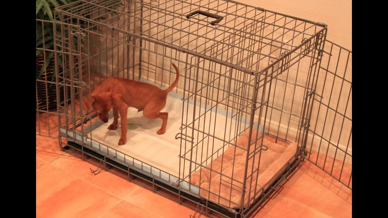 Buy puppy apartment cheap