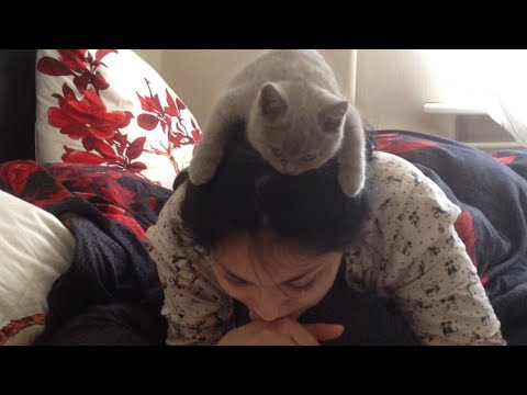 Girl Reads With Kitten on Her Head | Studious Like a Cat