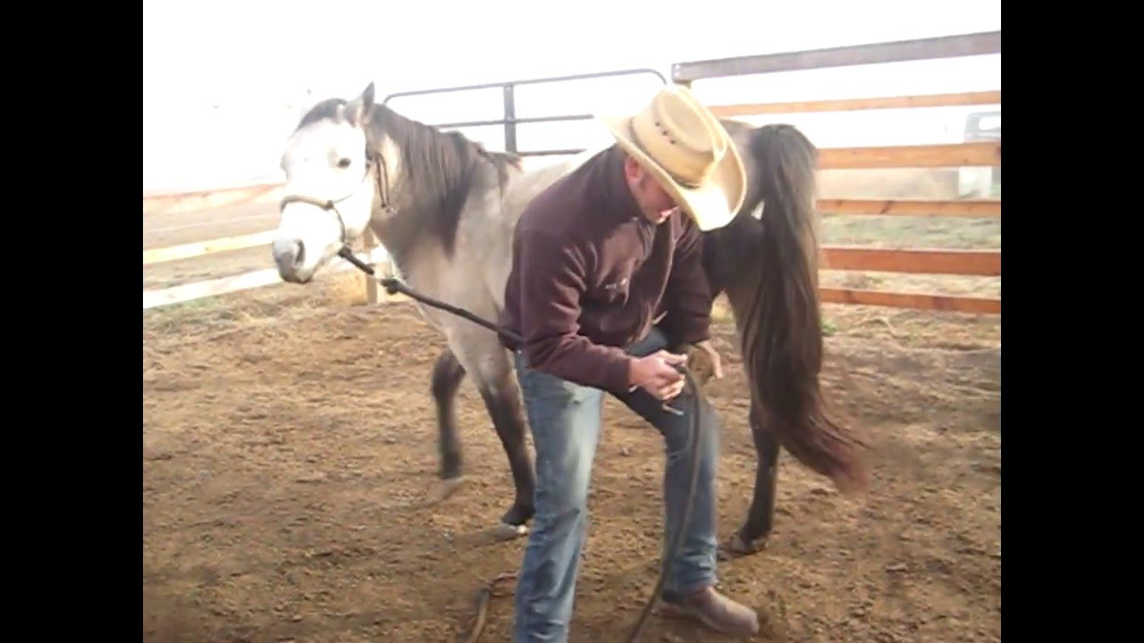 how to teach a powerful back up to a horse
