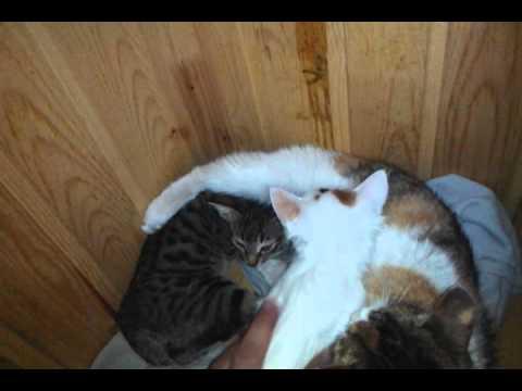 Котят отдам в добрые руки