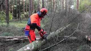 Working with chainsaws: Limb calmly and methodically