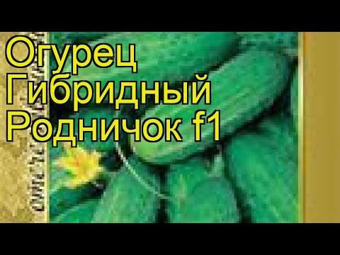 Огурец гибридный Родничок f1. Краткий обзор, описание характеристик, где купить семена Rodnichok f1