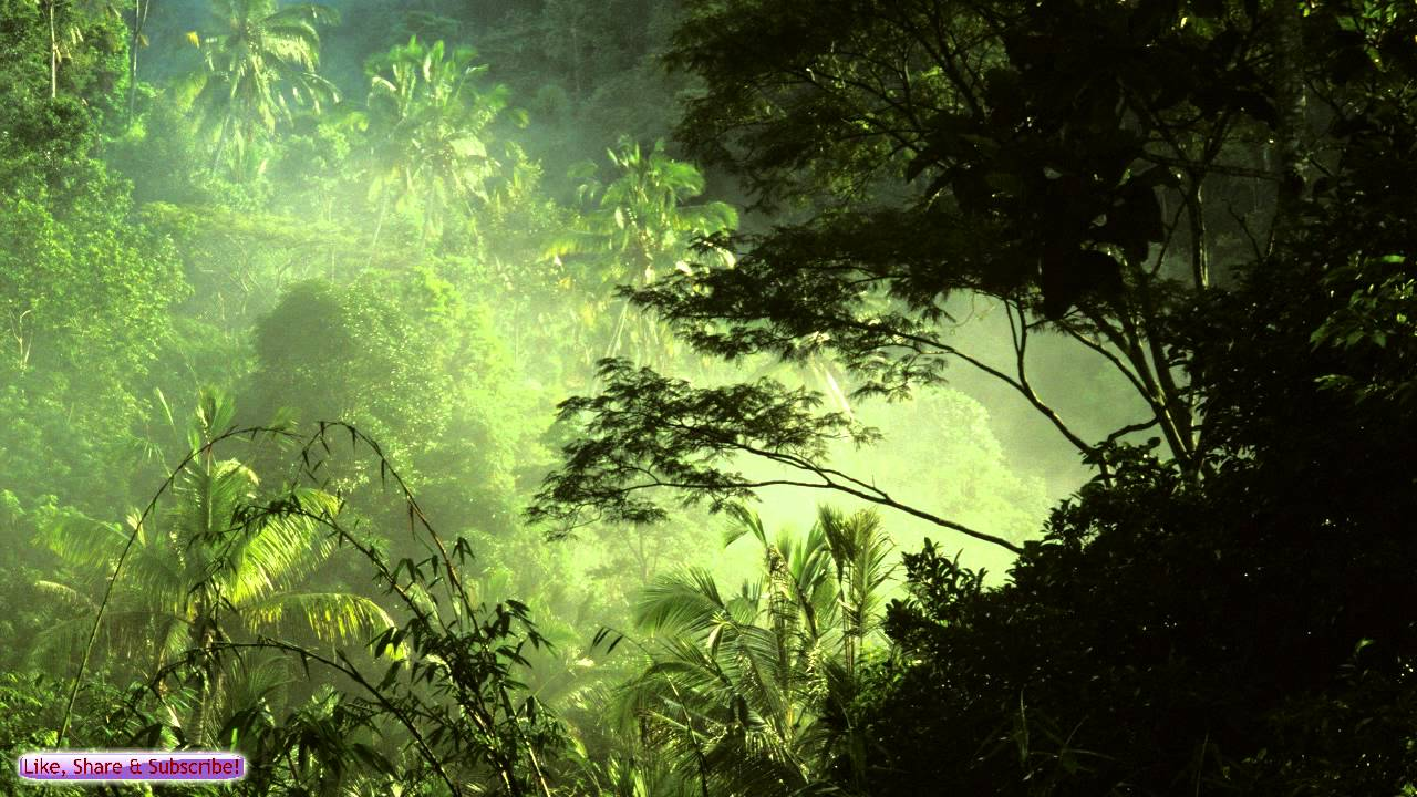 Relaxing Jungle Music Ambient Tropical Music Sleep